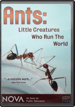 Ants - Little Creatures Who Run the World