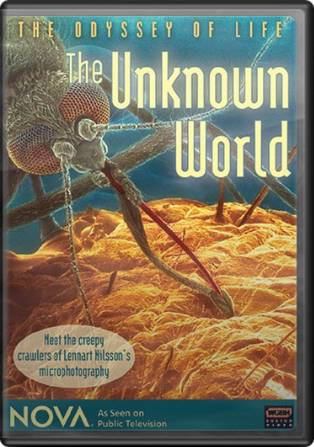 The Odyssey of Life: The Unknown World