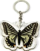 Asian Swallowtail Butterfly - Keychain