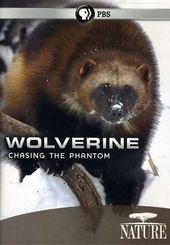 Nature: Wolverine - Chasing the Phantom