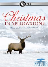 Nature - Christmas in Yellowstone