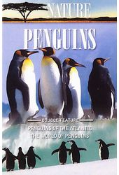 Nature: Penguins
