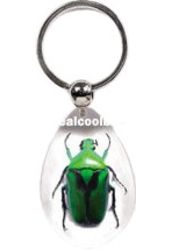Green Chafer Beetle - Keychain