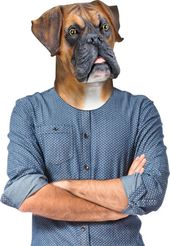 Barry the Boxer - Mask
