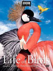 BBC - Life of Birds (3-DVD)