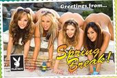 "Playboy - Spring Break Poster (24""x36"")"