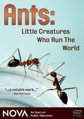 Nova - Ants - Little Creatures Who Run the World