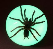Glow in the Dark Tarantula - Dome Paperweight