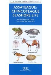 Assateague/Chincoteague Seashore Life: An