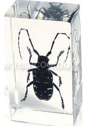 Black Longhorn Beetle - Medium Paperweight
