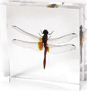 Dragonfly - Paperweight