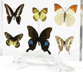 Butterfly - 6 Piece Collection
