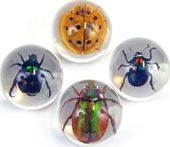 Beetle - Marbles (set of 4)