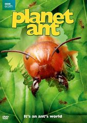 Planet Ant