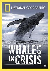 National Geographic - Whales in Crisis