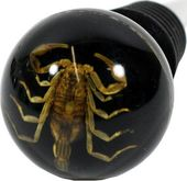 Gold Scorpion on Black Background - Wine Stopper