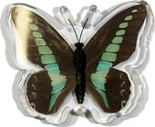 Blue Bottle Butterfly - Magnet