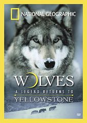 National Geographic - Wolves: A Legend Returns to