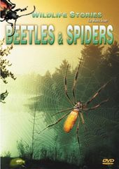 Wildlife Stories - Beetles & Spiders