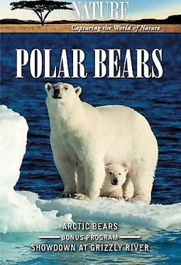 Nature - Polar Bears