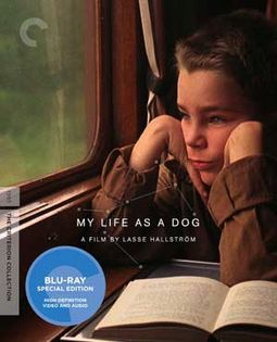 My Life as a Dog (Blu-ray)