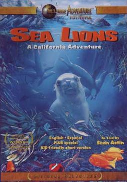 Sea Lions - A California Adventure